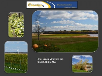 rines-creek-vineyard